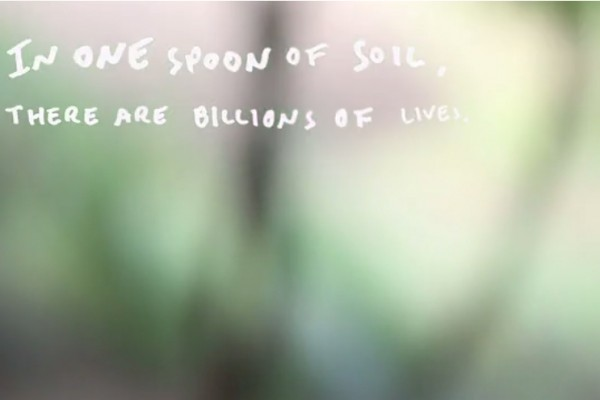 soil living things